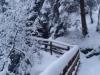 Winterspaziergang bei Neuschnee Tirol